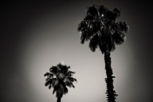 WHY ARE PALM TREES SO DAMN HAPPY