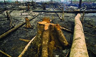 amazonia-queimada.png