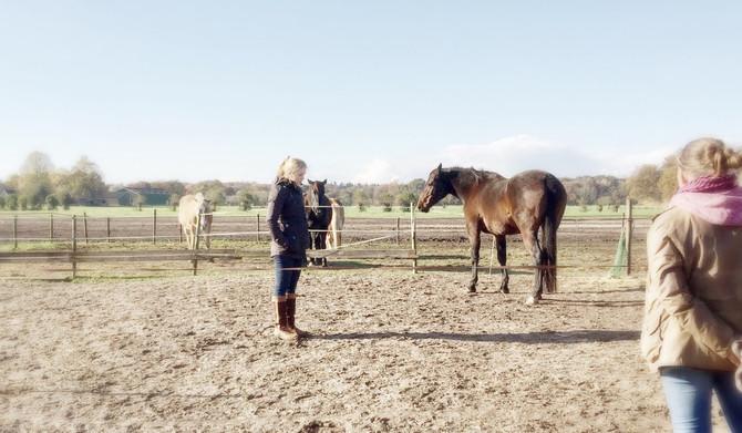 Paardencoachen. Wijsheid of waanzin?