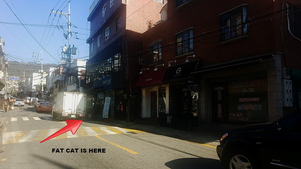 Fat Cat from the street, HBC - Life Itinerant