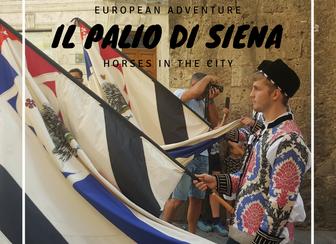 Il palio De Siena- horses in the city