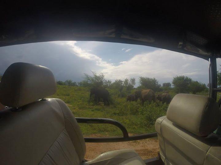 Elephants out the side of our Jeep, Udawalawe, Sri Lanka- Life Itinerant