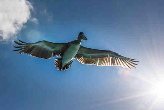 Galapagos in flight