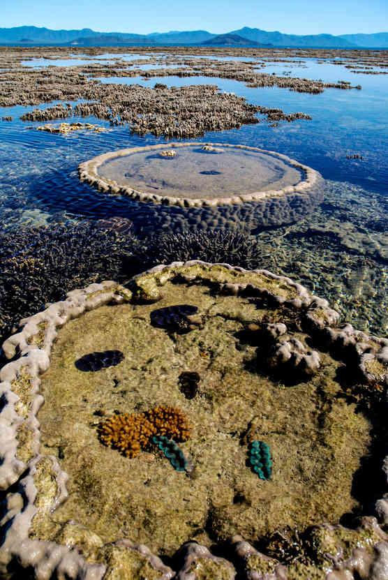 Coral plains