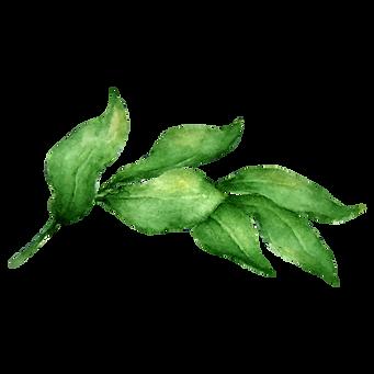 Les feuilles 2
