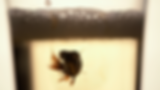 vlcsnap-2019-06-10-11h42m02s134555.png