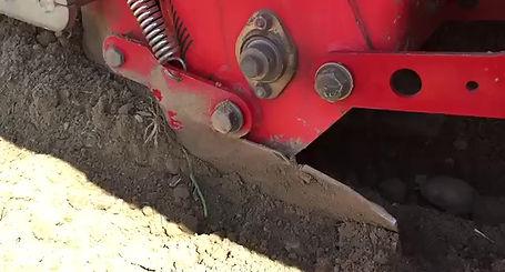 Kartoffelpflanzung in Zeitlupe