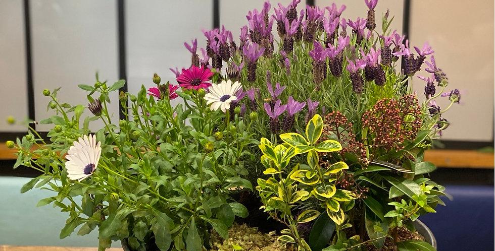 Coupe de plantes d'extérieur
