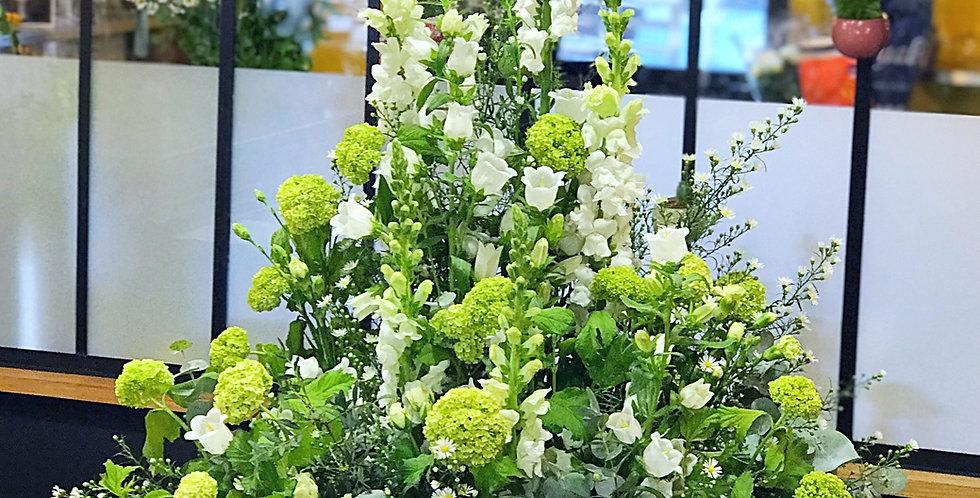 Fleurs des champs : Blanches & Vertes