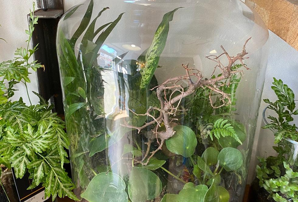 Terrarium : 4 Plantes