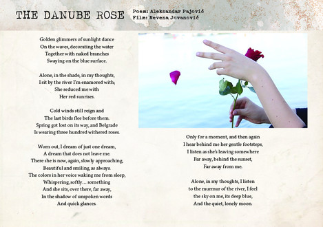 The Danube Rose