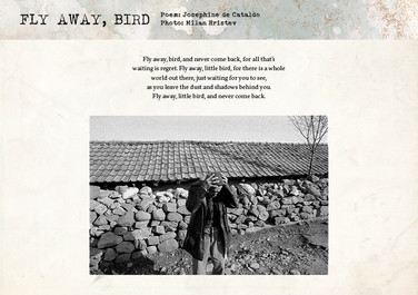 Fly Away, Bird