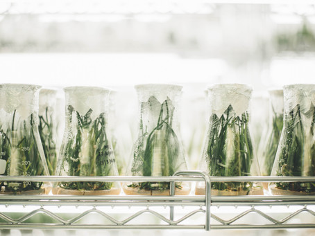 Weekly Medicinal Cannabis Research Wrap – 10/06/2020