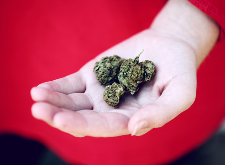 Rub of the Green: Six Kiwi cannabis firms to watch