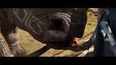 rhino_v02.jpg