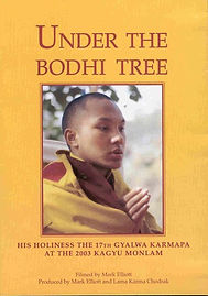 Under the Bodhi Tree DVD.jpg