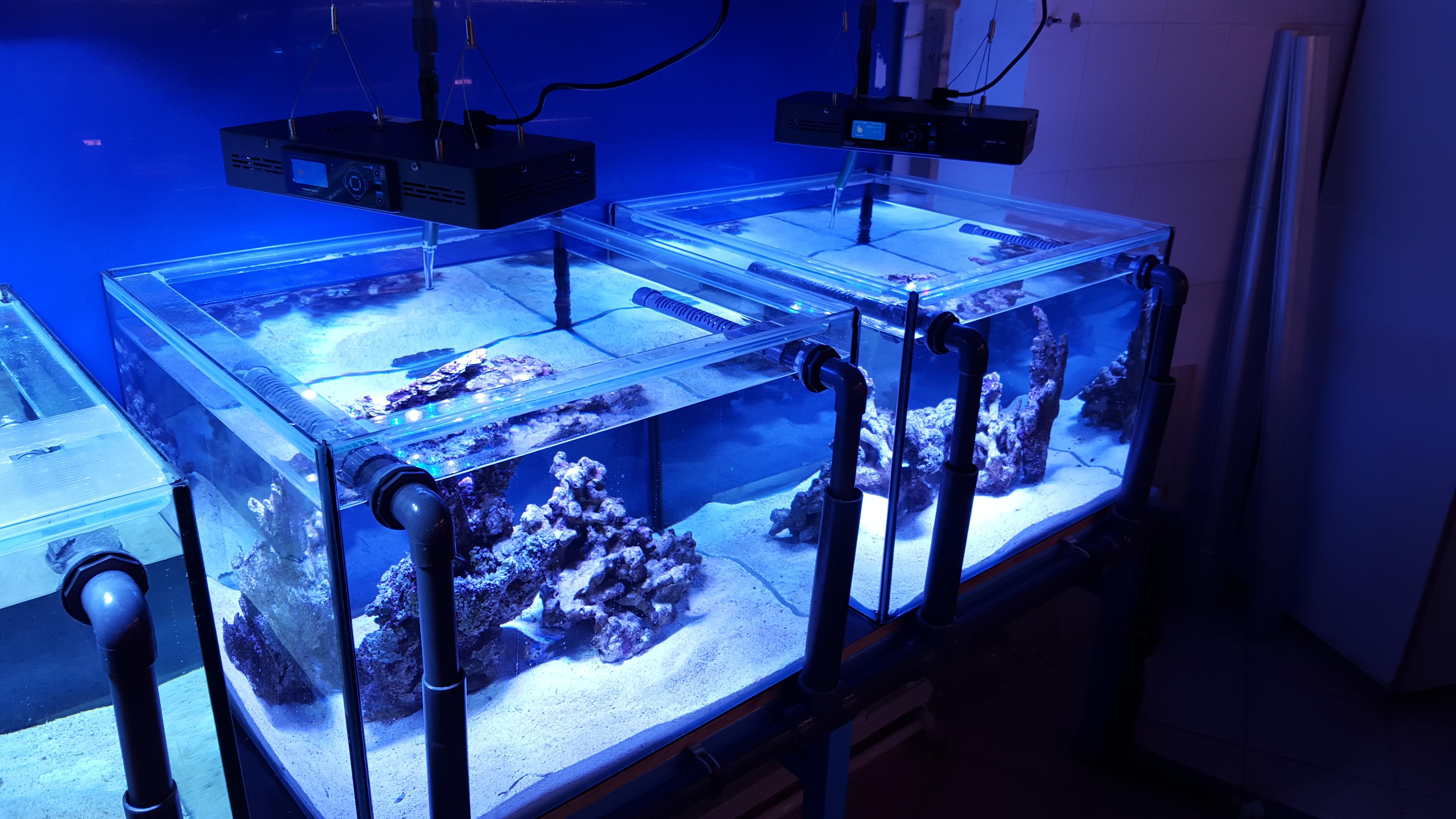 Мосркой аквариум