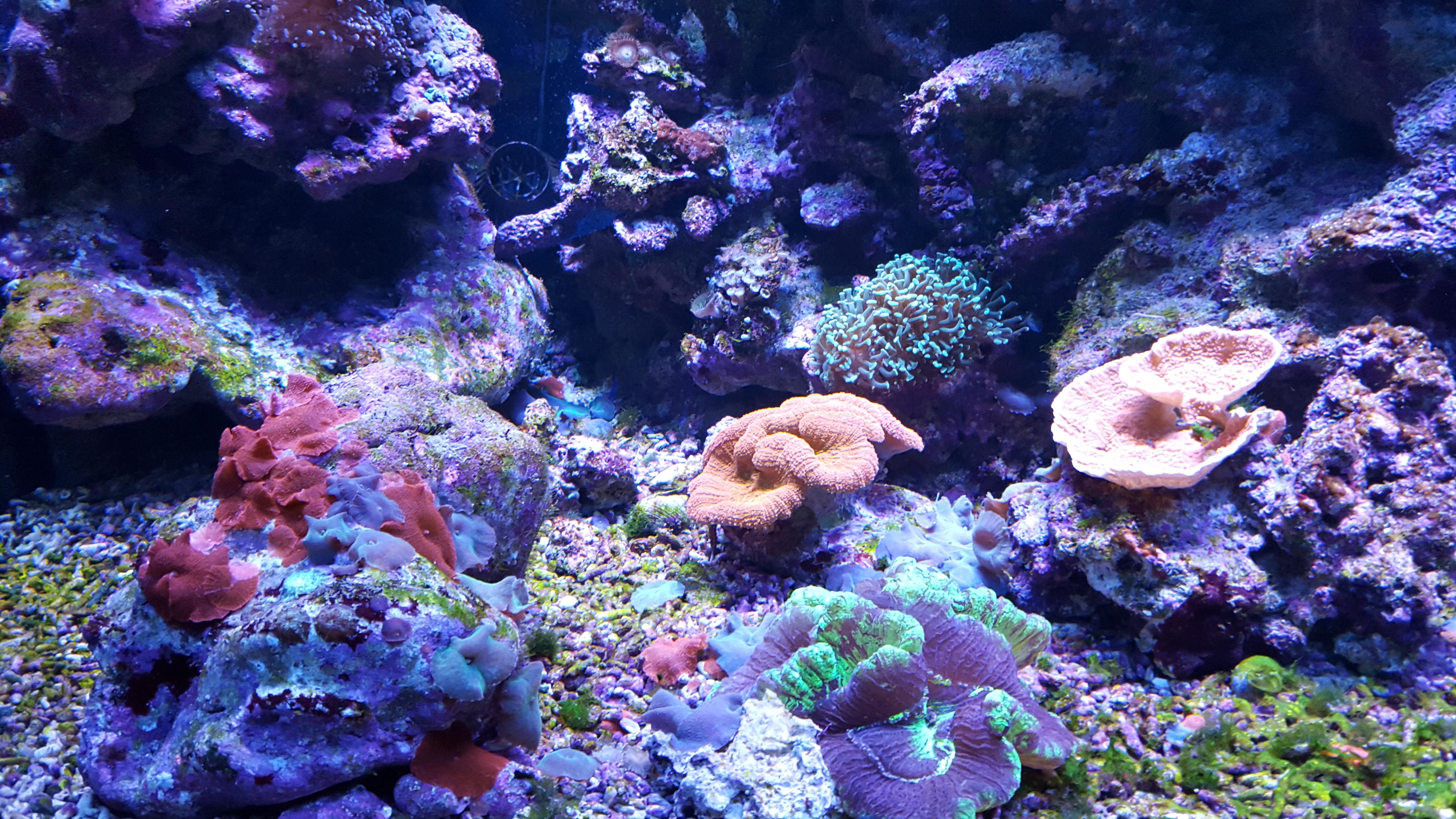 Кораллы в аквариуме