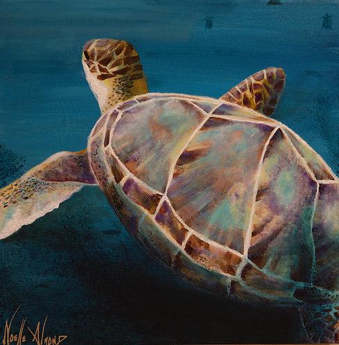 Green Sea Turtle by Noelle Almond