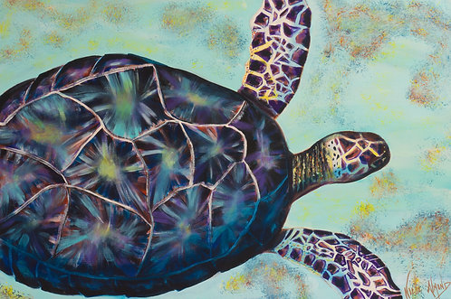 Great Expectations of the Sea Turtle by Noelle Almond