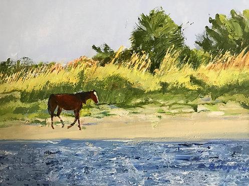 Lone Horse, Cumberland Island by Barbara Hopkins