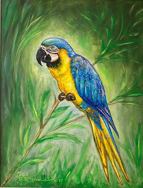 Blue Macaw by Dick Hamilton
