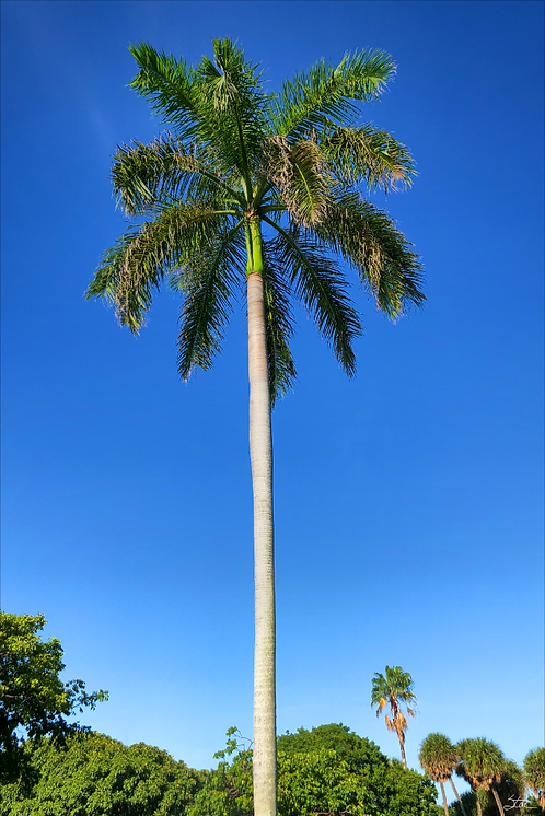 Palm Vertical by Stan Cottle