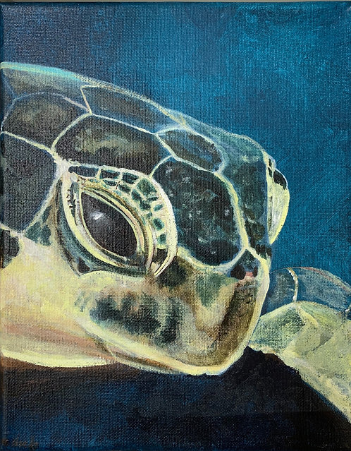 Perspective of a Sea Turtle by Noelle Almond
