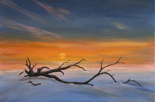 Beach Erosion Tree by Ed Mosher