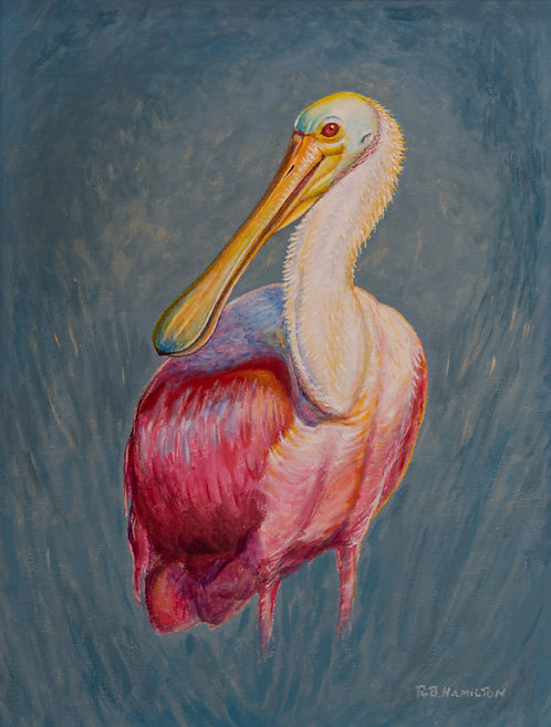 Spoonbill on Drummond by Dick Hamilton