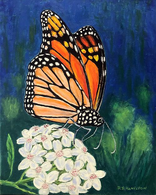 Monarch by Dick Hamilton