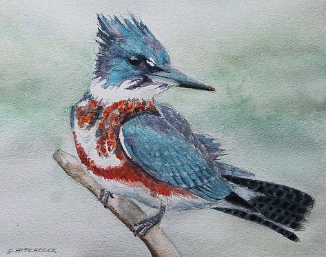 Kingfisher by Susan Hitchcock
