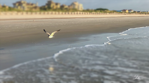 Beach Gull to CAM by Stan Cottle