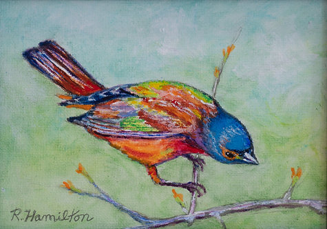 Painted Bunting by Dick Hamilton