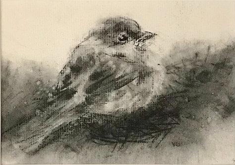 Sparrow 2 by Victoria Germond
