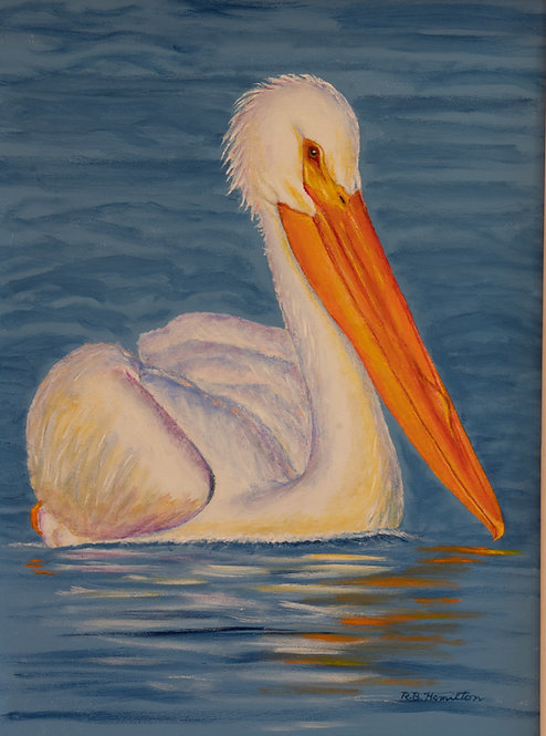 White Pelican on Drummond by Dick Hamilton