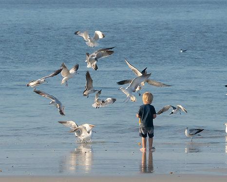 Giggles and Gulls by Karen Bowden