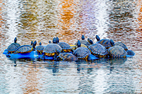 Room for One More by Karen Bowden