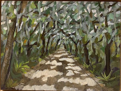 Canopy Road by Trish Jones