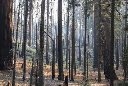Wildfire Aftermath.jpeg
