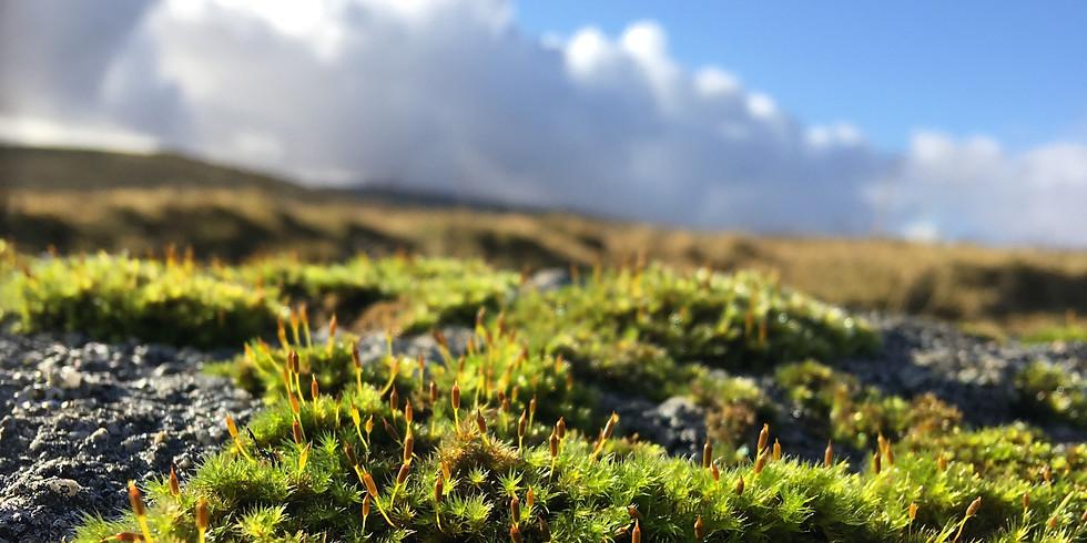 Women Walking, South Dartmoor