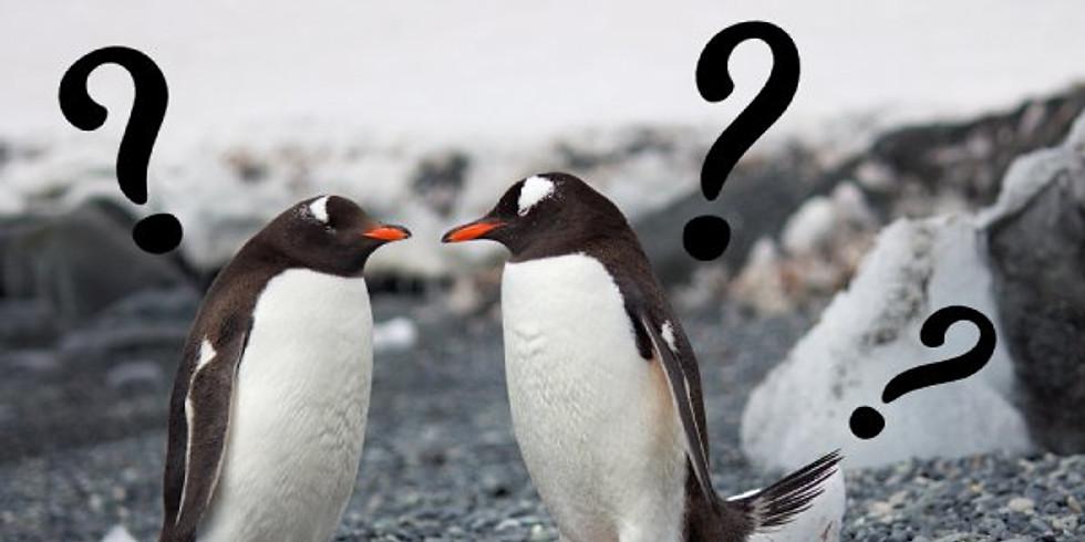 11/14土≪Animal≫ペンギン
