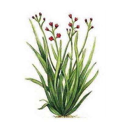 Huile essentielle Palmarosa Bio 10 ml - Floressence
