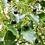 Thumbnail: Huile Essentielle Ravintsara Bio 10 ml - Floressence
