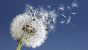 Comment soulager et prévenir les allergies