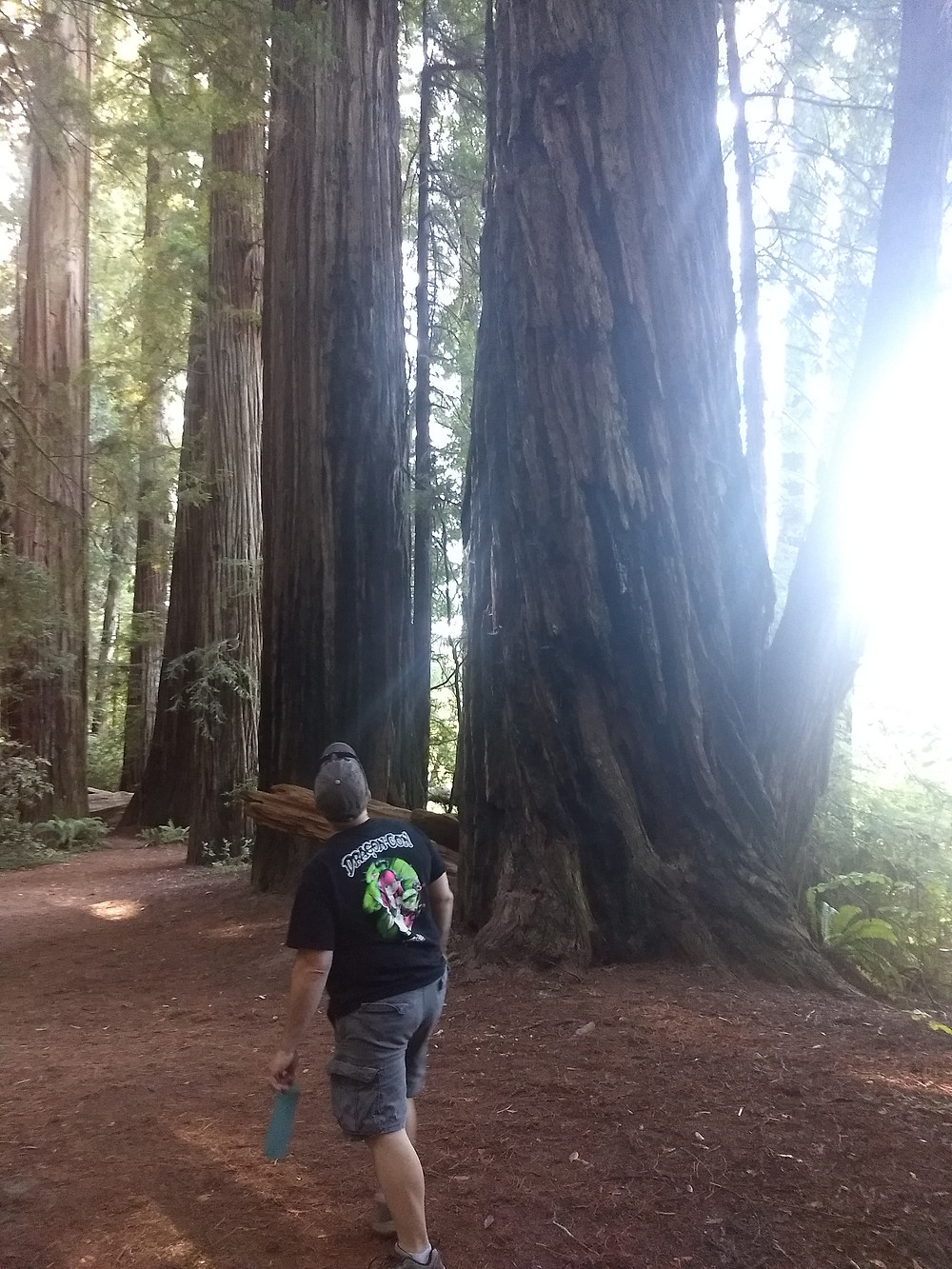 Jeremy, in his best DragonCon tshirt, admiring these awesome behemoth trees