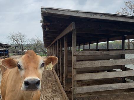 Back on the Farm!!