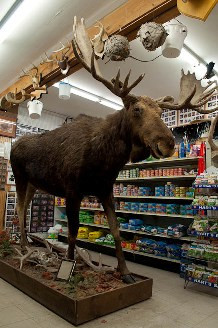 Taxidermy inside Currier's Quality Market keeps you entertained while you wait for your deli sandwich