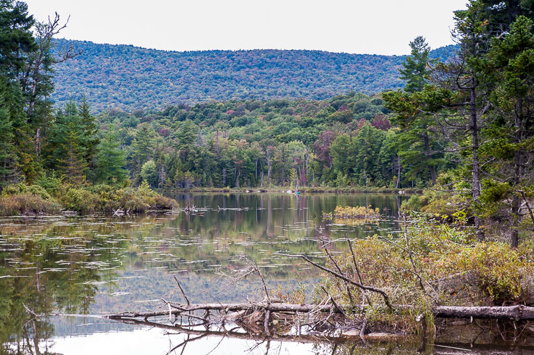 Pond on the Cedar River Road