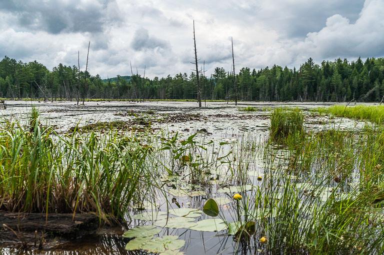 Johnson Pond